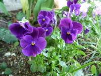 お花いっぱい - une Belle Chose 日々のつれづれ