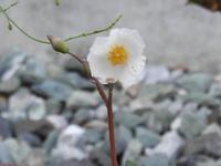 庭の草花(6回目) - 小さなお庭のある家(パート2)