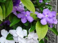 身近にある花々(2) - 花と葉っぱ