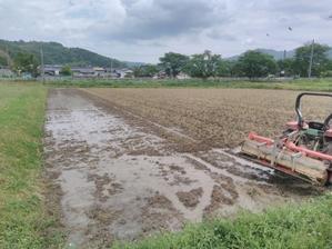 浅水代掻きを一回で済ますための条件 砕土の程度と入水時間を考慮する - 岡山の米屋四代目 明日のご飯ブログ
