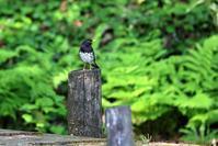 緑色の朝 - 綺麗な野鳥たち