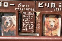 青草ボール - 徒然日記