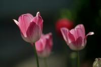 「紅旗」レンズで花を撮る - 見る聞く歩く