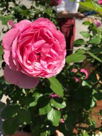 5月教室のお知らせ - 好きな物に囲まれて* お花とお茶と楽しい時間 *