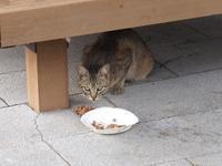 猫 - 老いの小文