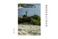 夏きざすその⑤ - ゆきおのフォト俳句