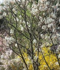 6月のジューンベリー - 軽井沢プリフラdiary