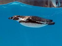青いプールとペンギン - 動物園放浪記