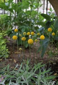 新しく迎えた花を植えながら少しだけ庭仕事 - ヒバリのつぶやき