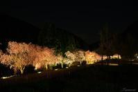 竹田の里枝垂れ桜 - 今日の空+α2