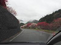 2019.04.30 花桃の里 - ジムニーとピカソ(カプチーノ、A4とスカルペル)で旅に出よう