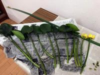 河骨(コウホネ)の生け花 - リリ子の一坪ガーデン