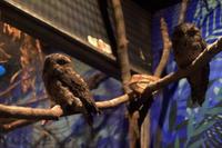 鳥めぐり - 動物園へ行こう