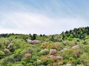 **春の色** -