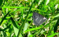 令和元年西風の季節 - 紀州里山の蝶たち