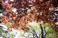 5月18日今日の写真 - ainosatoブログ02