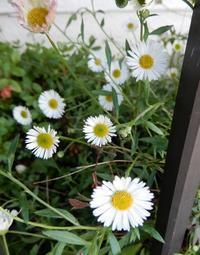 挨拶してるかのように・・・ - 【出逢いの花々】