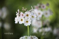 続・花美の庭*浜名湖ガーデンパーク - MIRU'S PHOTO