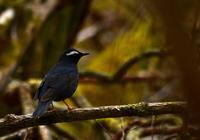 森の中で。。 - Love birds !