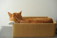 オシッコが出ないのでヒルズ『尿ケアs/d』と『尿ケアc/d』『尿ケアc/dマルチケアコンフォート』、ドクターズケア『猫用ストルバイトケア』を試した感想 - ほんじつのトムさん