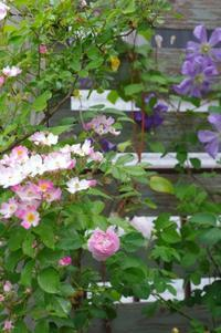 ウェルカムフラワー! - Le Bouquet de Hortensia