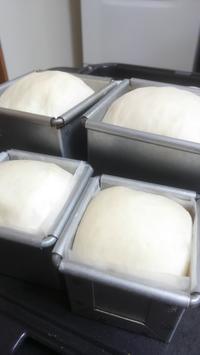 手のひらサイズの山形食パン - おでかけメモランダム☆鹿児島