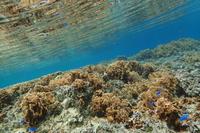 19.5.20お天気、一転二転、三転。 - 沖縄本島 島んちゅガイドの『ダイビング日誌』