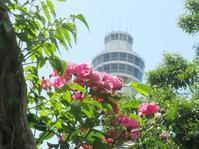 山手と周辺の薔薇 #5 - 神奈川徒歩々旅