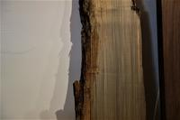 神代栃製材後4か月経過 - SOLiD「無垢材セレクトカタログ」/ 材木店・製材所 新発田屋(シバタヤ)