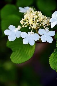 花の名前が分からない - 写心食堂