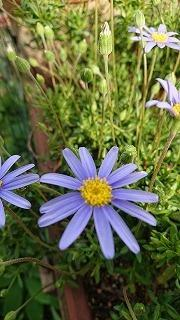 庭の花 - 趣味の部屋0074