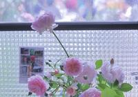リクエストは薔薇 - 赤煉瓦洋館の雅茶子