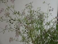 コリアンダー⁉ - フラワーショップデリカの花日記