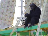 マリリンとマモル[日本モンキーセンター] - a diary of primates