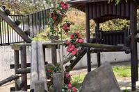 もふてく☆ゴールデンパン祭り2019大森山編・その3 - レッサーパンダ☆もふてく放浪記