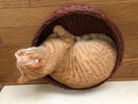 直角栗ちゃん - 愛犬家の猫日記
