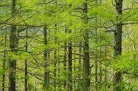 戦場ヶ原の新緑 - 自然と仲良くなれたらいいな2