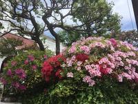 日本滞在ー植物編 - フィンランドでも筆無精
