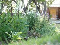 初夏の庭しごと庭に咲いた宿根草の花 - シンプルで心地いい暮らし