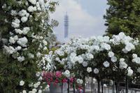 どこへ行っても横浜は花盛り - ことのは