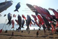 山口県⑤<砂浜の鯉のぼり> - my FHOTO