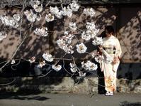 宴のあと(après la fête de fleurs de cerisier) - ももさえずり*紀行編*cent chants de chouette
