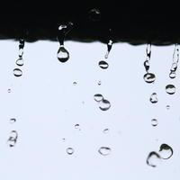 大雨 - TACOSの野鳥日記