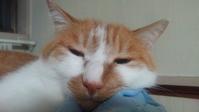 【猫】オネム - 人生を楽しくイきましょう!