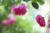 雨の日は・・♪ - マイ・ライフ