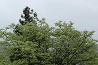 【よりみち編】雨に濡れる青葉 - 長岡・夢いっぱい公園