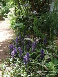 Jardín sombreado - Gardener*s Diary