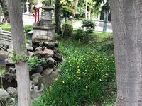 神社のキショウブ - つれづれ日記