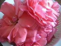 薔薇の花でジャム作り - 花の自由旋律