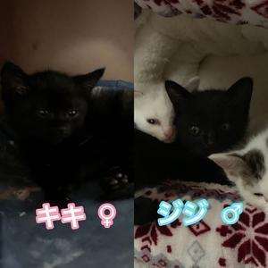 新たに子猫保護しました🙋♀️ - 青梅ニャンだふる☆Life